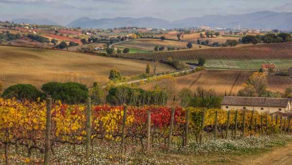SAGRANTINO: A WINE COMING FROM HISTORY