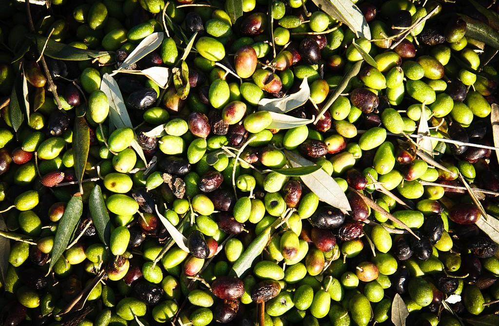 Umbria and its extra virgin olive oil