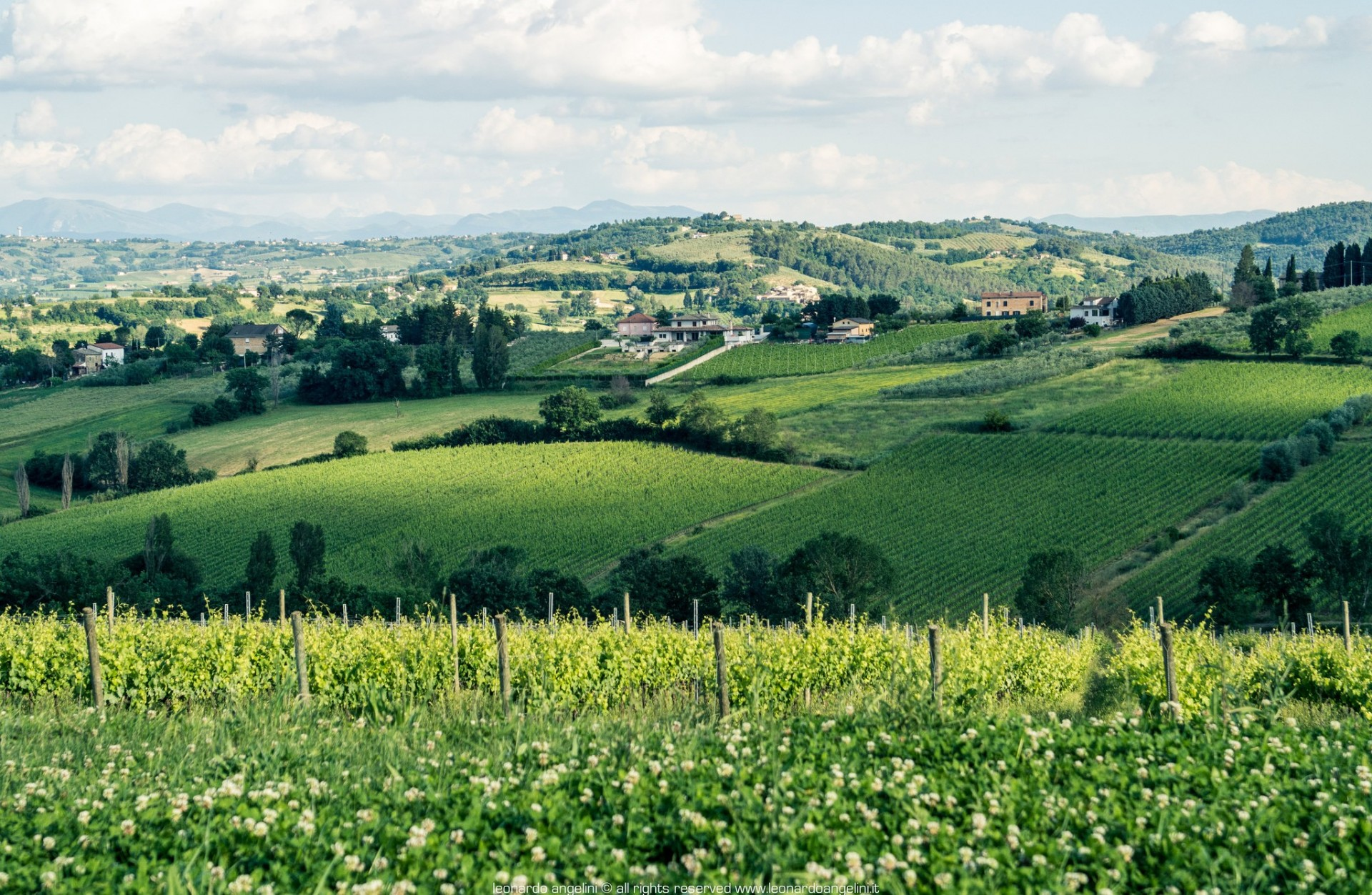 Montefalco, The king of Sagrantino