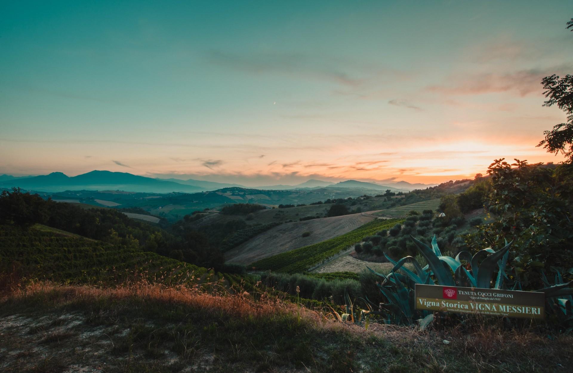 Wine & Art in the Hills of the Marche and Ascoli Piceno
