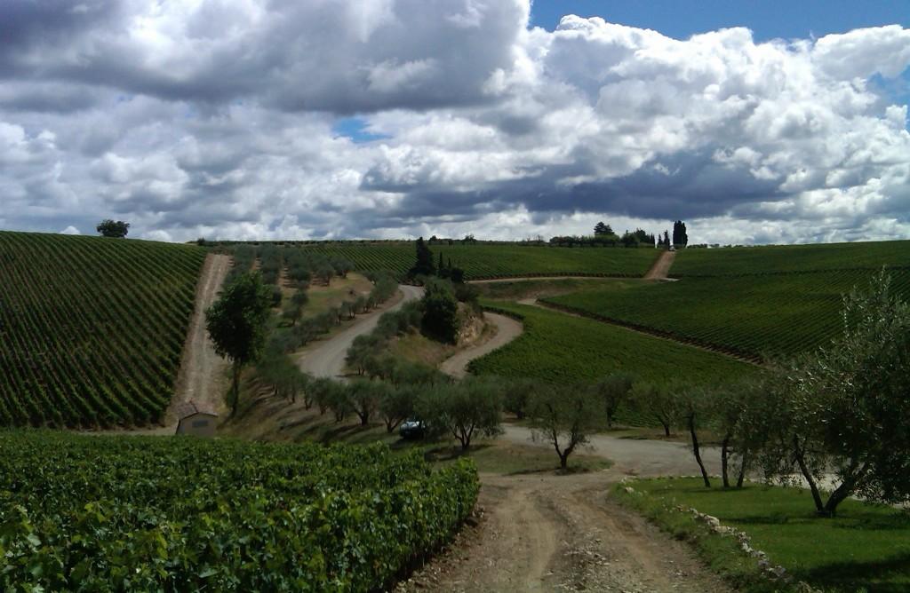 L'antica tenuta di San Gimignano l'eccellenza del vino e prodotti locali