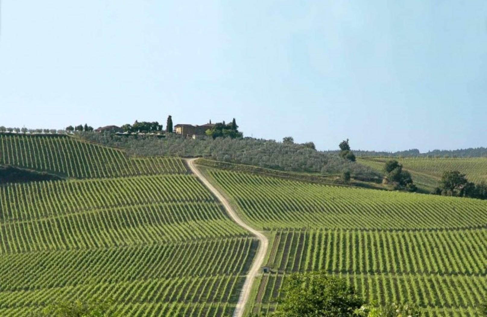 I vini del Chianti, visita di una cantina e degustazione