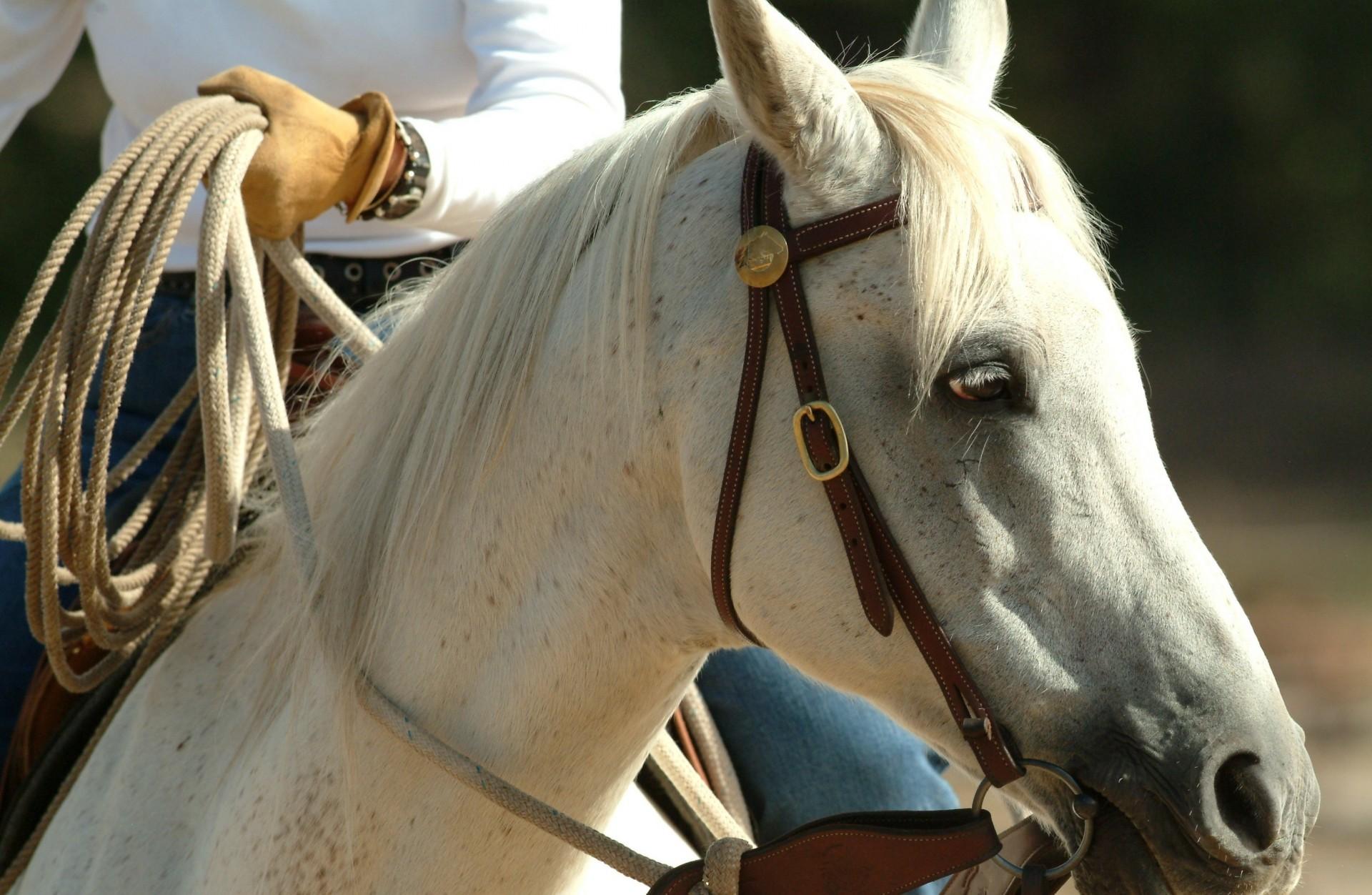Passeggiata a cavallo sui Monti Martani