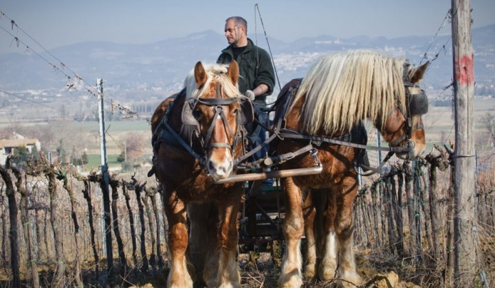 Carriage wine tour and bio wine tasting