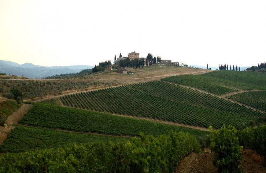 Taste & Relax on the Chianti Hills