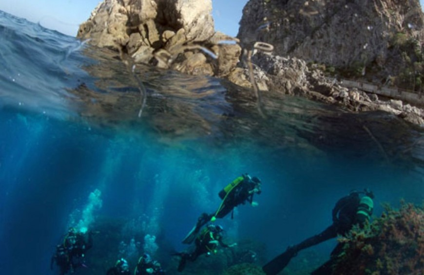 COURSE NATURALIST - Discovering the marine biology of the Mediterranean