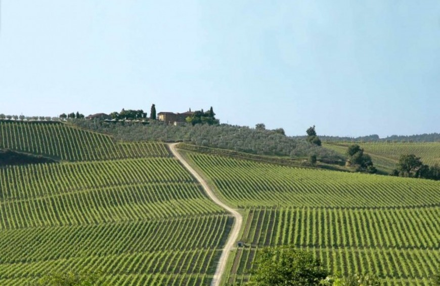 Wines of Chianti, visit of winery and tasting