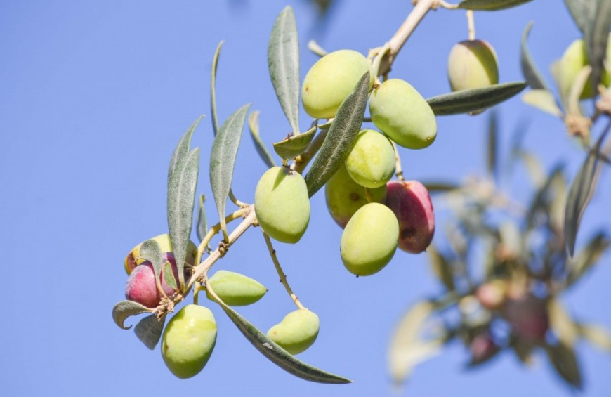 Between centuries-old olive groves to taste excellent oil and food!
