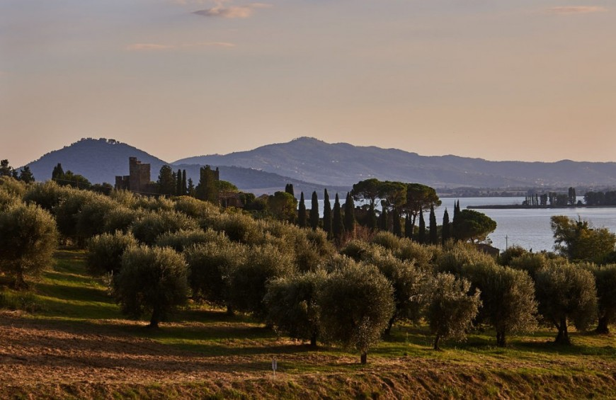 Wine & Olive Oil tour on Trasimeno Lake