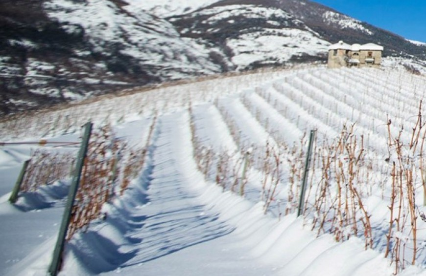 The excellence of Valle d'Aosta: visit to a winery and tasting